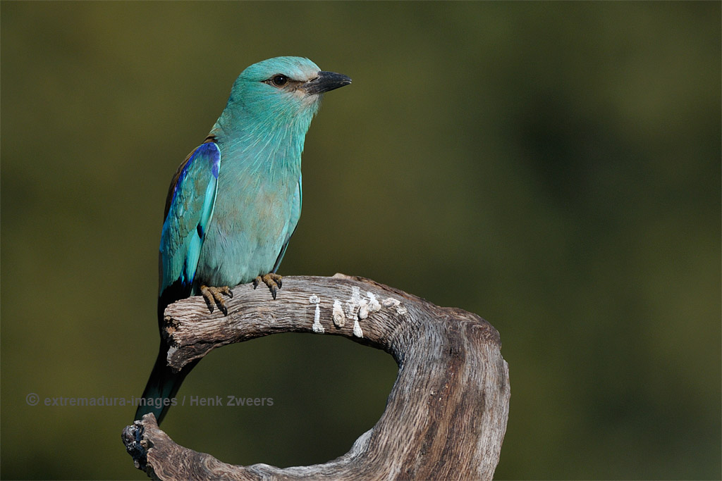 aves_108big