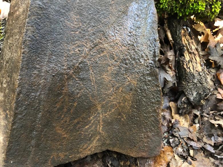 Leaf fossilized